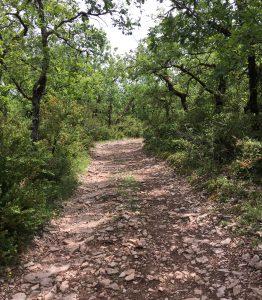 Le Chemin dans les forêts de chênes.
