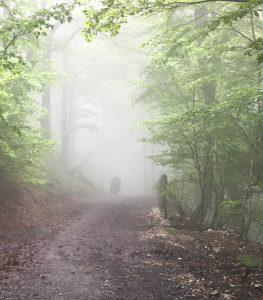 La descente dans la forêt.