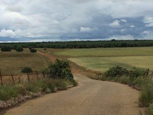 La Via Trajana à Calzada del Coto